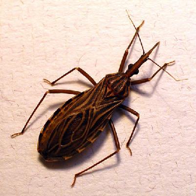 Chagas, enfermedad atendida